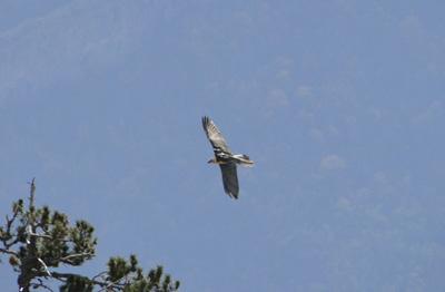 Turismo ornitológico en la Jacetania