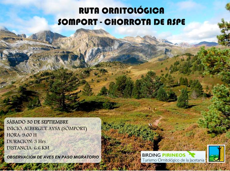 Ruta ornitológica en la Comarca de la Jacetania